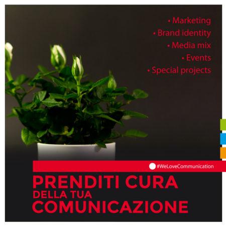 DomesticTree-comunicazione-cuneo-marketing