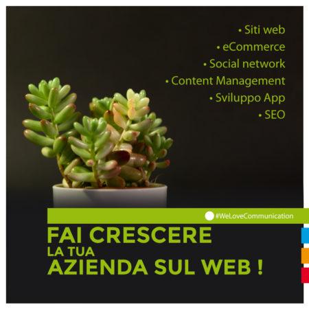 DomesticTree-comunicazione-cuneo-web