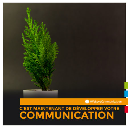 DomesticTree-communication-cuneo-photo-et-video
