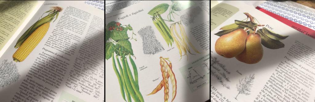 Immagini di frutta e verdure estratte dal libro Il buon sapore dell'orto, Reader's Digest Association